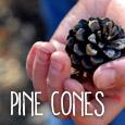 nature_study_pine_cones_sm